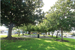 Bronte park trees with concrete patio area